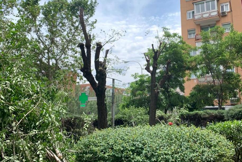 Poda de áboles en Madrid