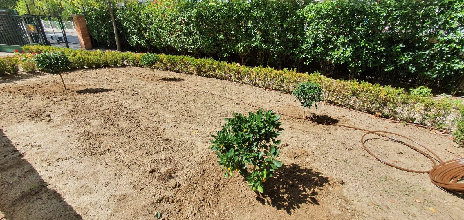 Jardineria de Foret en el Palacio de Viana, Ministerio de asuntos Exteriores